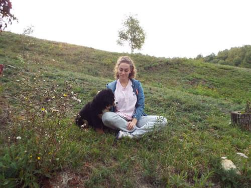 Berner Sennehunde Dog