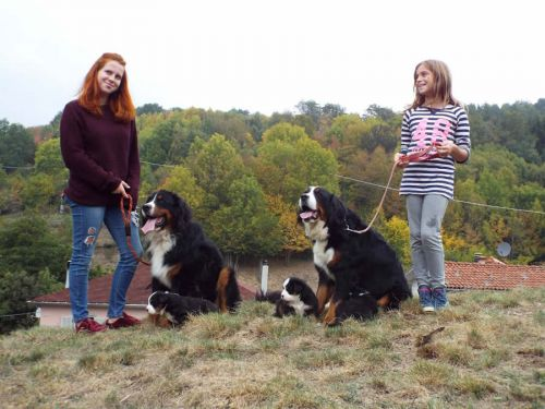 Puppies Berner Dog